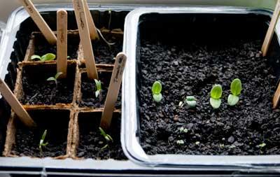 Seeds!