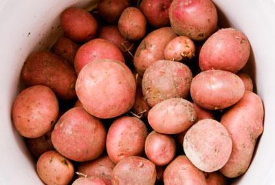 home grown potatoes.