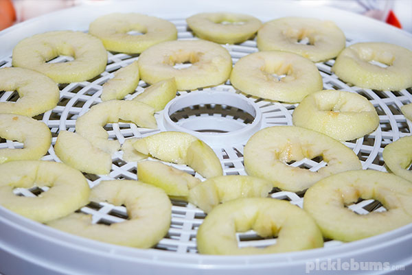 Apples in the dehydrator