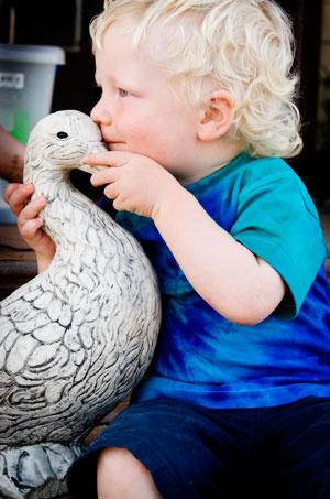 muski-duck