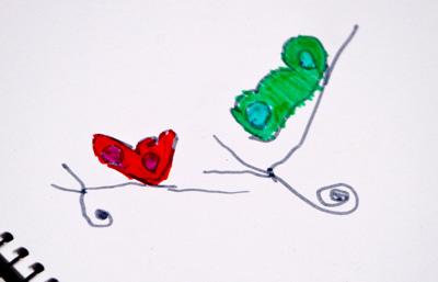 zoedrawbutterfly