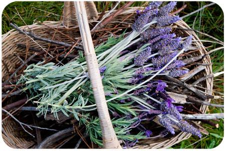 sticks-and-lavendar