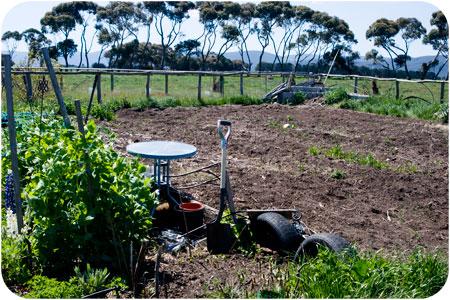 veggiegarden-dirt