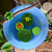 Frog Pond Small World – Easy Imaginative play
