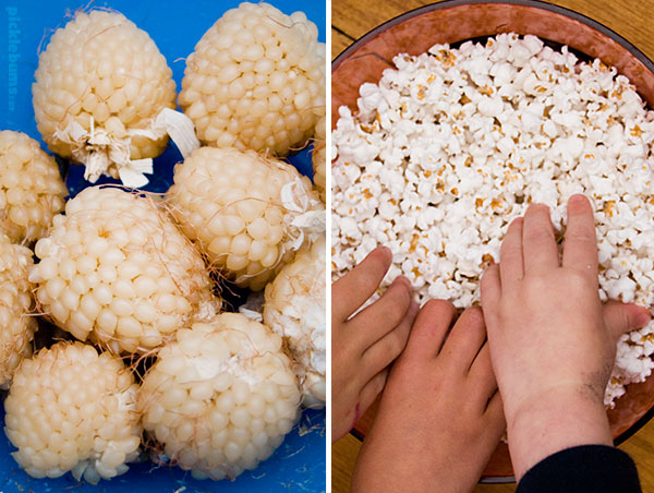 Grow your own popcorn!