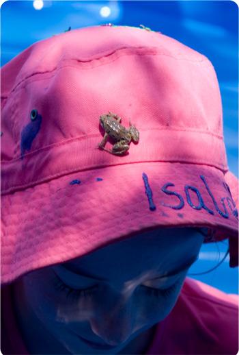 frog on hat