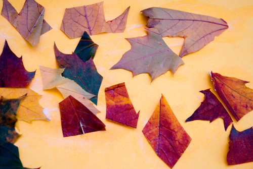 Autumn Leaf Mosaic Collage