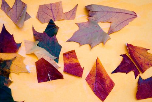 Autumn Leaf Mosaic Collage