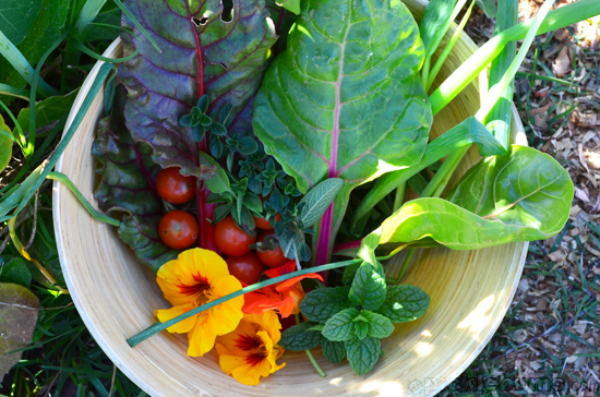 rainbow chard quice recipe