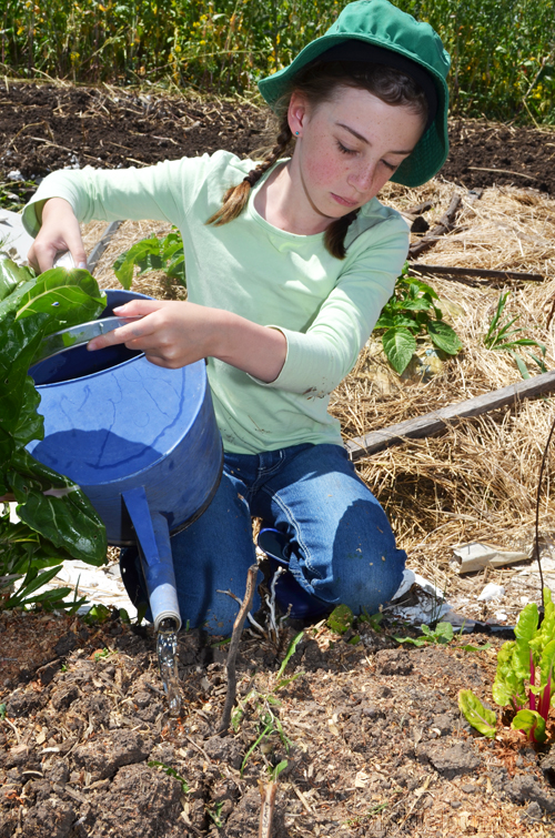 kid friendly food garden planting seeds in the garden
