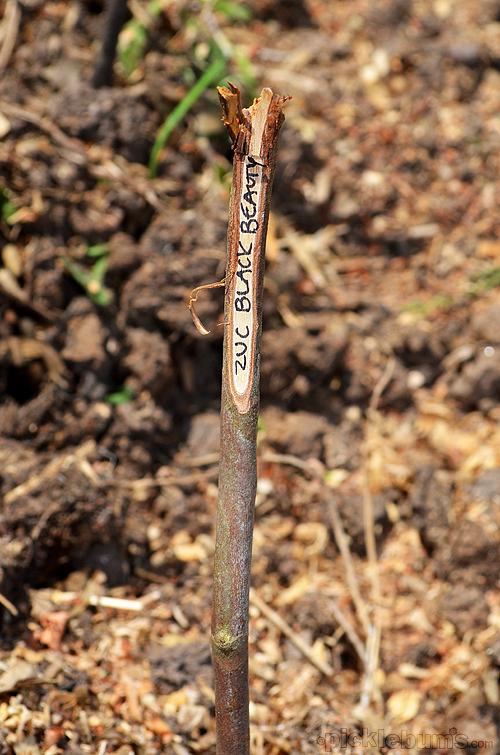 twig marker