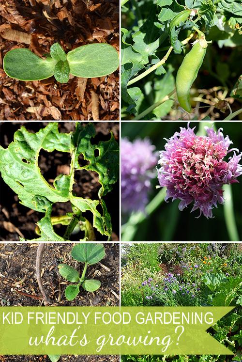 Kid Friendly Food Gardening – What's Growing In Your Garden?