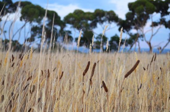 tinder dry paddocks