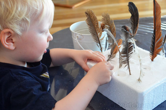 fine motor activity - feathers into a foam block