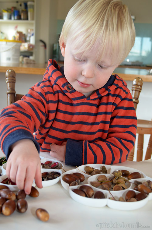 Why Collecting Stuff is Good for Kids  and ideas for acorns -