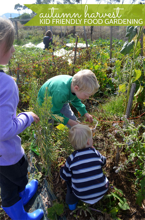 Kid Friendly Food Gardening - Getting the kids involved in the last of the harvest.