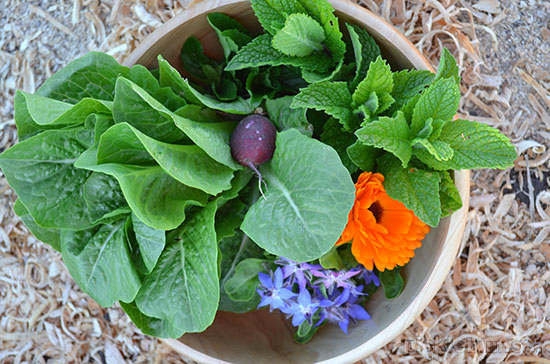 Eat What you Grow! An easy spring salad and balsamic dressing