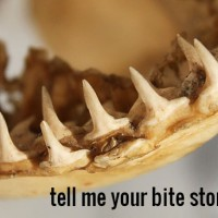 Tell us your bite story!