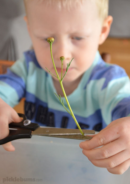 Snipping Flowers and Leaves - a fun way to practice scissor skills