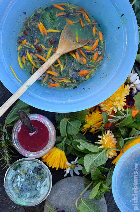 Growing A Magic Potion Garden Picklebums