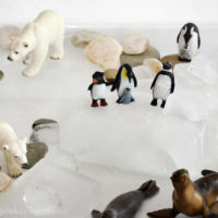 Polar Habitat Imaginative play - plus lots of books and craft ideas for the Arctic and Antarctic